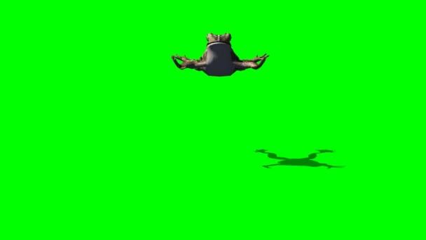 Hnědá žába skok