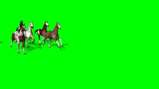 Csoport futó lovak