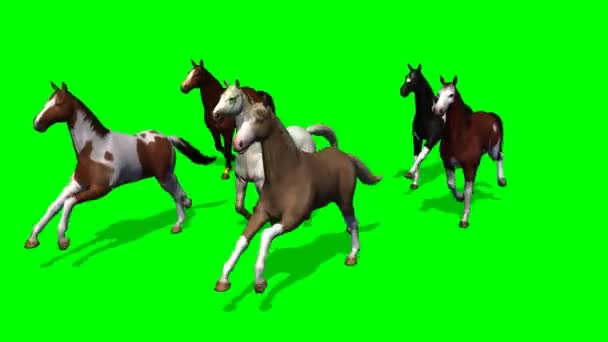 Skupina běžící koně
