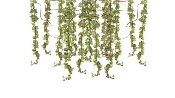 Indák zöld szőlő