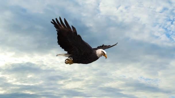 Orel bělohlavý Flight detail sledování snímku