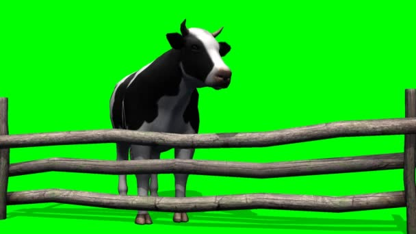 Cows graze in the pasture - green screen