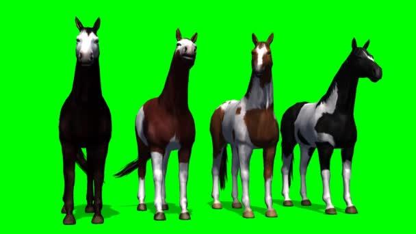 Skupina koní v pohybu - zelená obrazovka