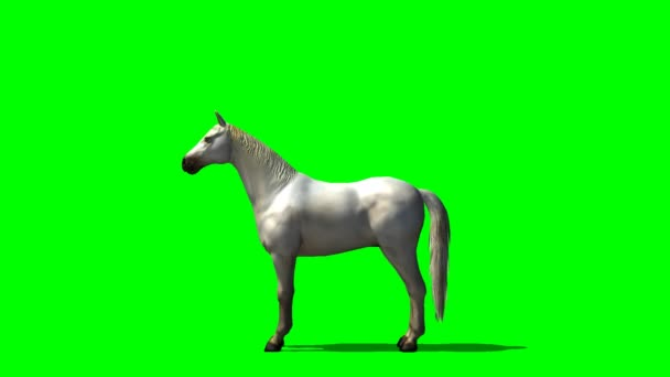 White horse in motion - green screen