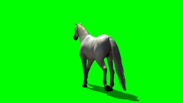 White horse walks - green screen