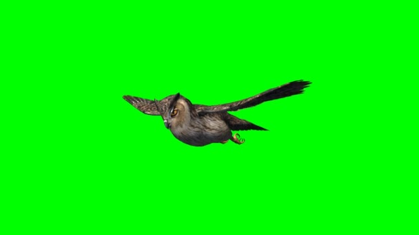 Bagoly suhan repülés