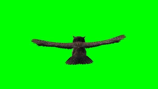 Sova v klouzavém letu