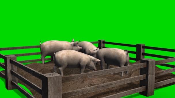 Sertések fából készült kerítés - zöld képernyő mögött