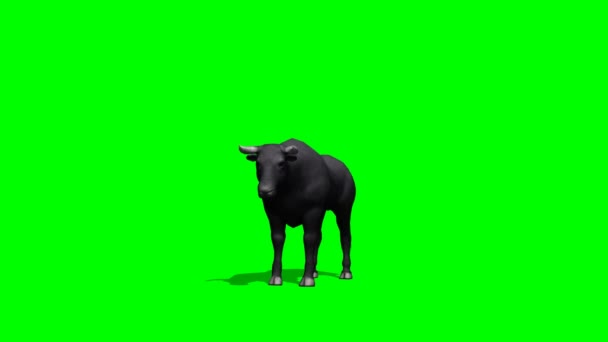 Black Bull idle on green screen