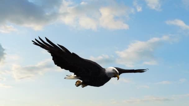 Bald Eagle Flight Close-Up Tracking-Aufnahme