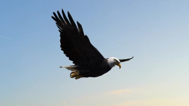 Weißkopfseeadler in Nahaufnahme geschossen