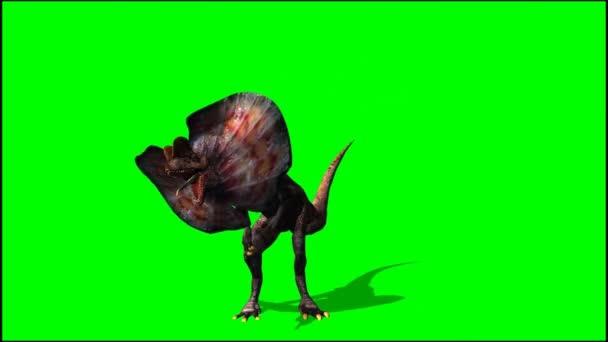 Dinoszauruszok dilophosaurus néz körül - zöld képernyő