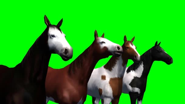 Group of horses on green background