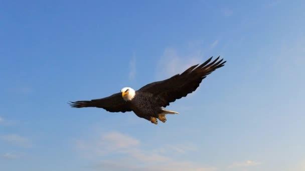 Bald Eagle fliegt in den Himmel