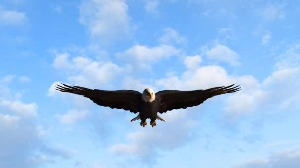 Kopasz sas repül az égen