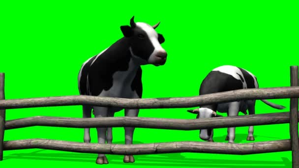Cows on the pasture - green screen