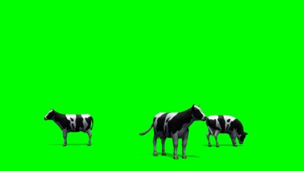 Mucche al pascolo su priorità bassa verde