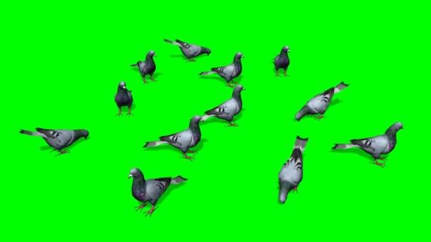 Holuby jíst na zeleném pozadí
