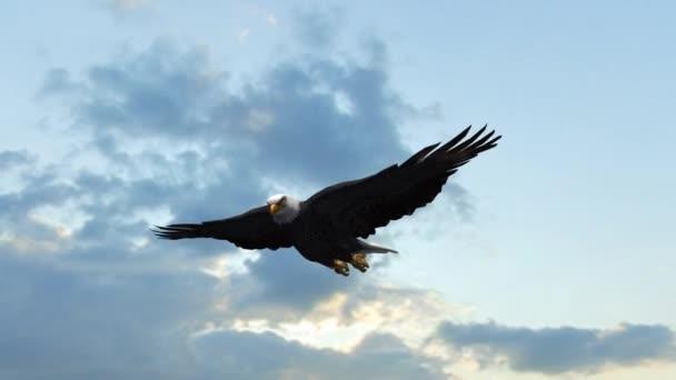 Weißkopfseeadler fliegt in den Himmel