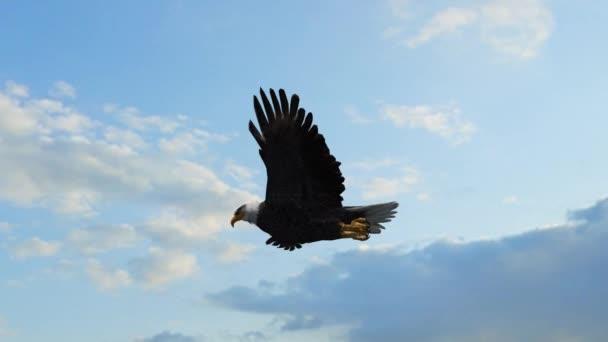 Orel bělohlavý létá v nebi