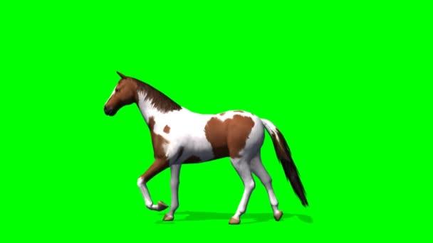 Ló séta - zöld képernyő