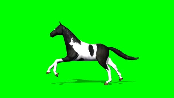 Horse runs - green screen