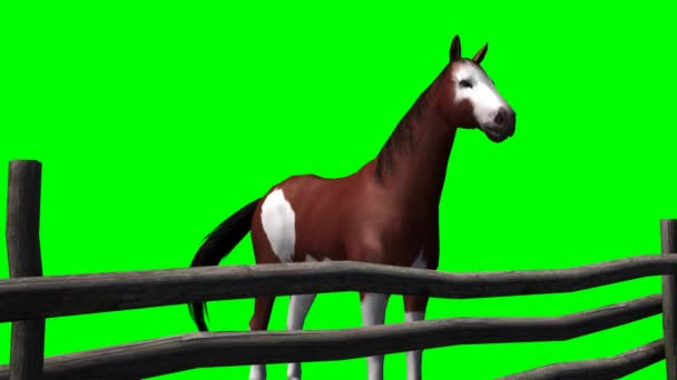 Horse behind a wooden fence - green screen