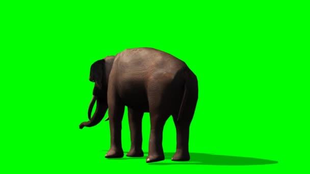 Slon africký rozhlížet