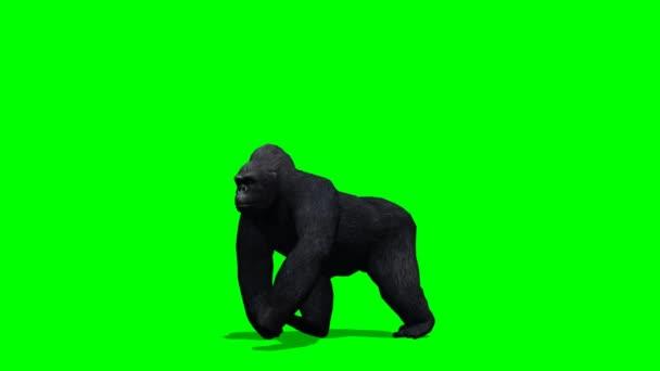 green gorilla stock