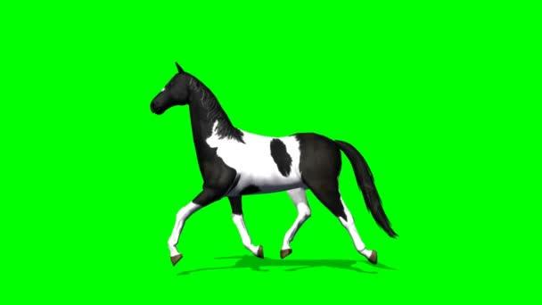 Horse cantering - green screen