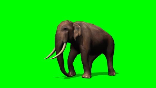 afrikai elefánt séta