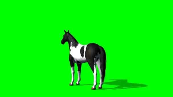 Horse  rising - green screen