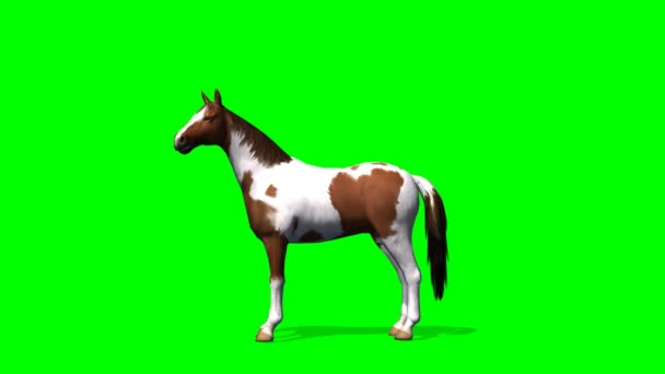 Horse in motion - green screen