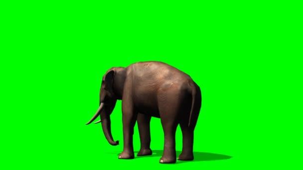 Afrikai elefánt fa-ból eszik