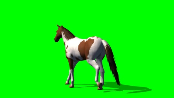 Horse walks - green screen