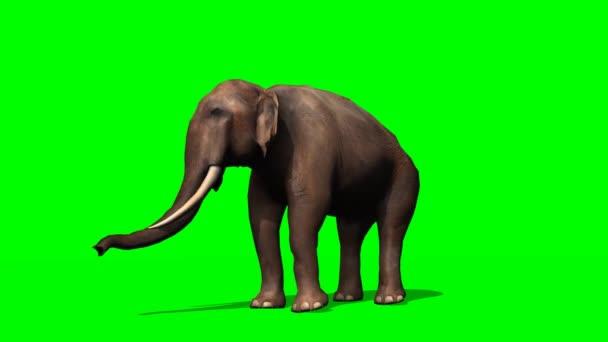 Afrikai elefánt körülnézett