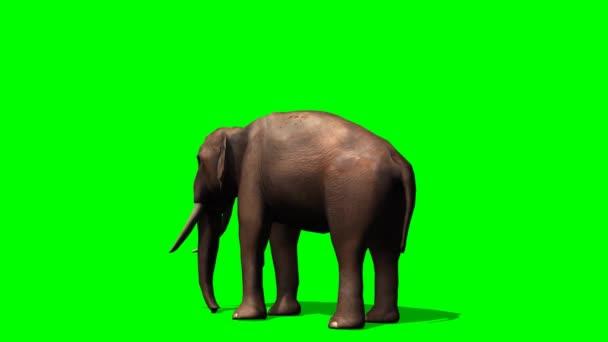 afrikai elefánt eszik