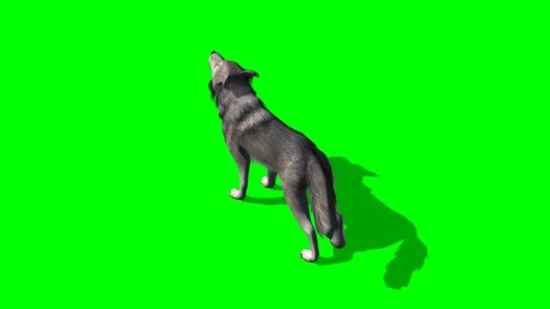 Vlk vyjící na zeleném pozadí