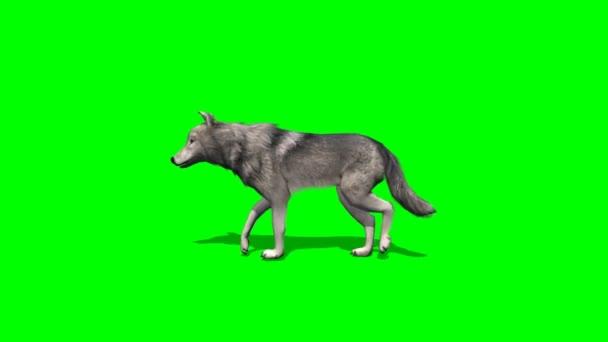 Vlk na zeleném pozadí