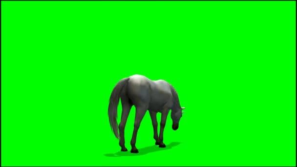 Jednorožec, pasoucí se na zeleném pozadí