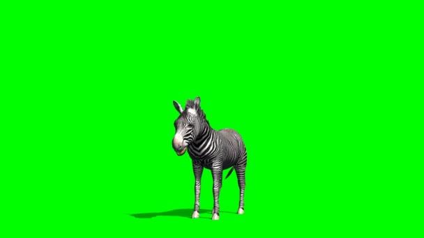 Zebra állt, és nézett körül
