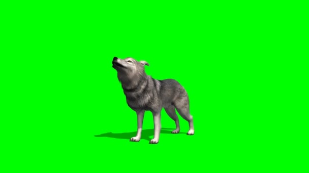 Wolf howling on green background