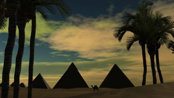 Velbloud v poušti s Egypt pyramidy