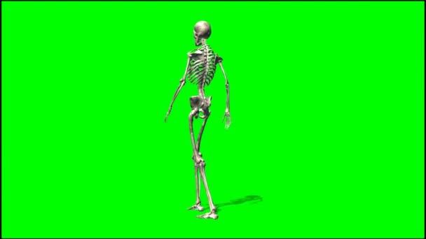 Male skeleton walks