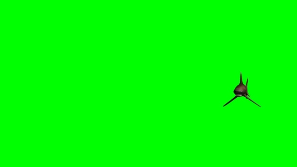 Shark swimming on green screen