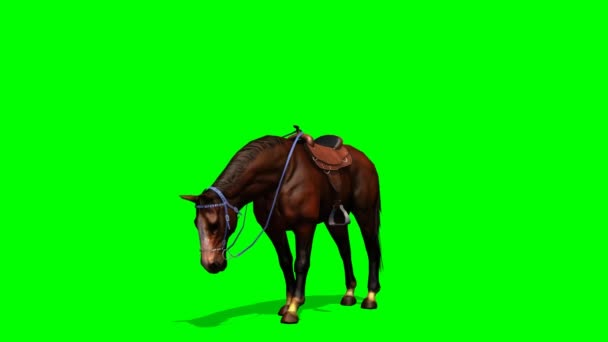 Brown Horse with a saddle graze