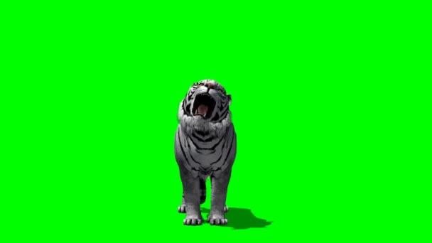 Tygr řve na zelené obrazovce