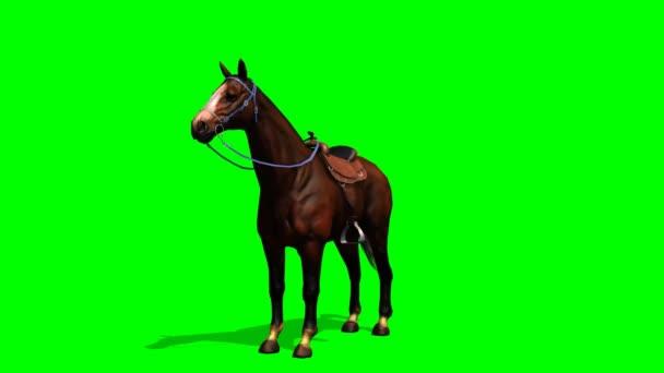 Kůň se dívá kolem sebe