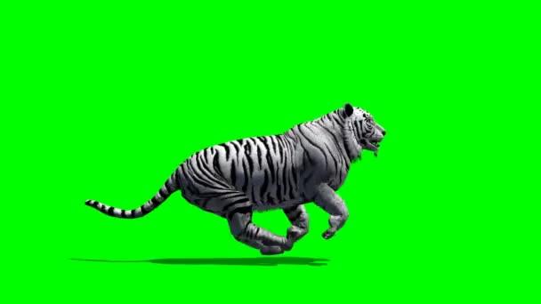 Tigris fut a zöld képernyőn