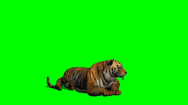 Bengáli tigris hazudik
